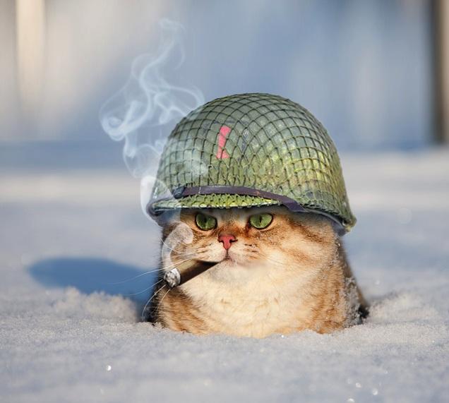 general-meow.jpg