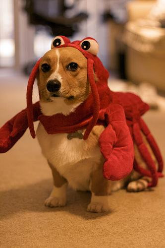 Red Lobster Dog Fort
