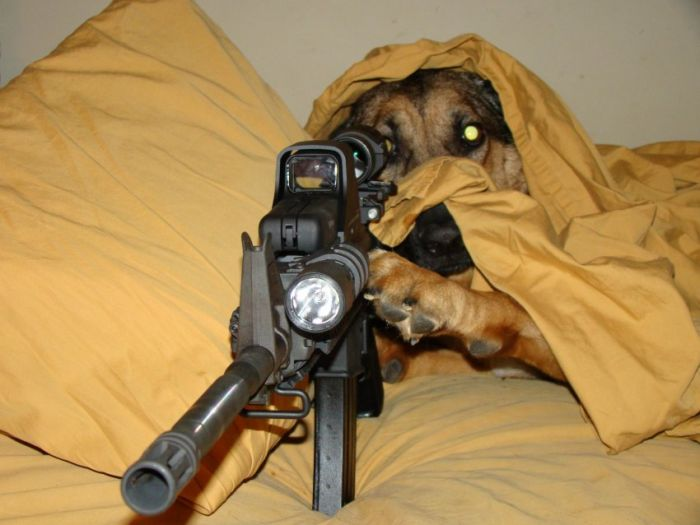 Sniper dog - BoreMe