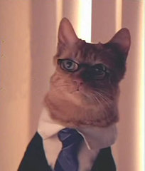 lawyer-cat1.jpg