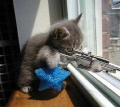 sniper-kitty.jpg