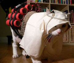 suicide-bomber-kitty.jpg